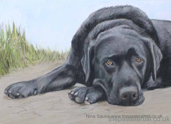 Pet portrait by Nina Squire, Dorset. Black labrador