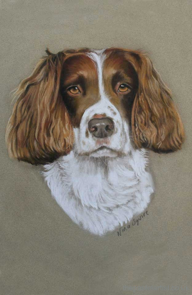 Springer Spaniel hand drawn in pastel by Nina Squire
