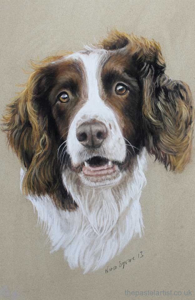 Working spaniel pastel portrait