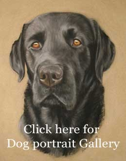 Pet portraits in pastel, dog portraits.
