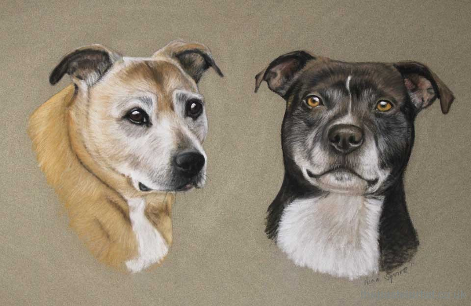 Pet portrait of two staffy's in pastel drawn by Nina Squire
