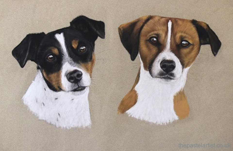 Two terrier in pastel by Nina Squire