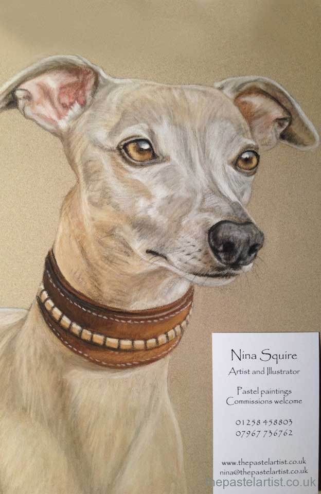 Whippet portrait in pastel drawn by Nina Squire