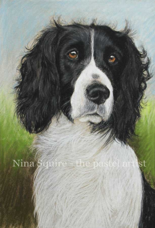 Pet and dog portraits in pastel