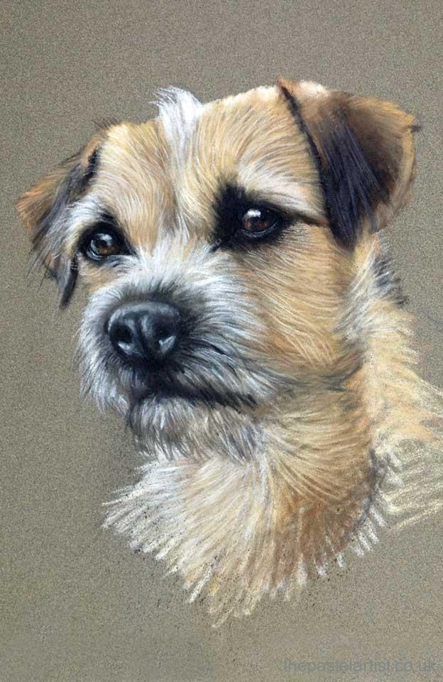 Border Terrier drawn in pastels