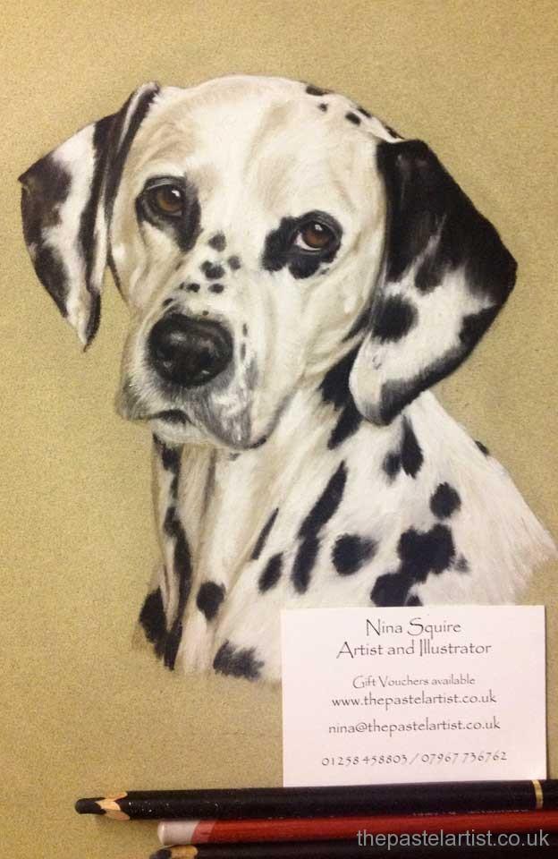 Dalmatian dog portrait by Nina Squire, Dorset