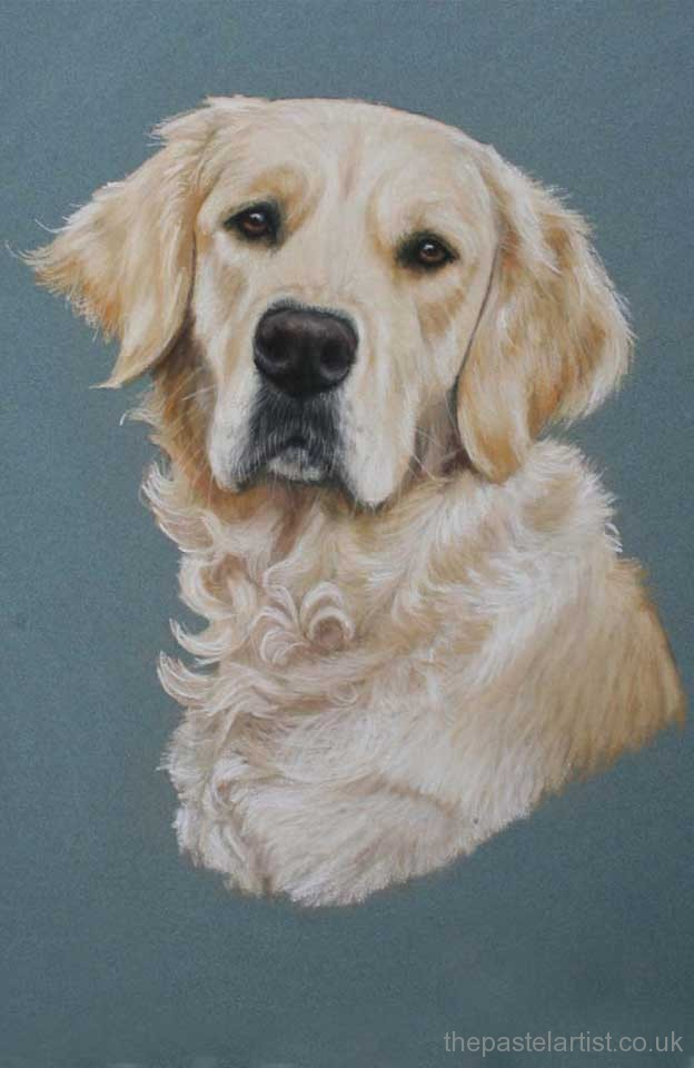 Golden Retriever in pastels by Nina Squire