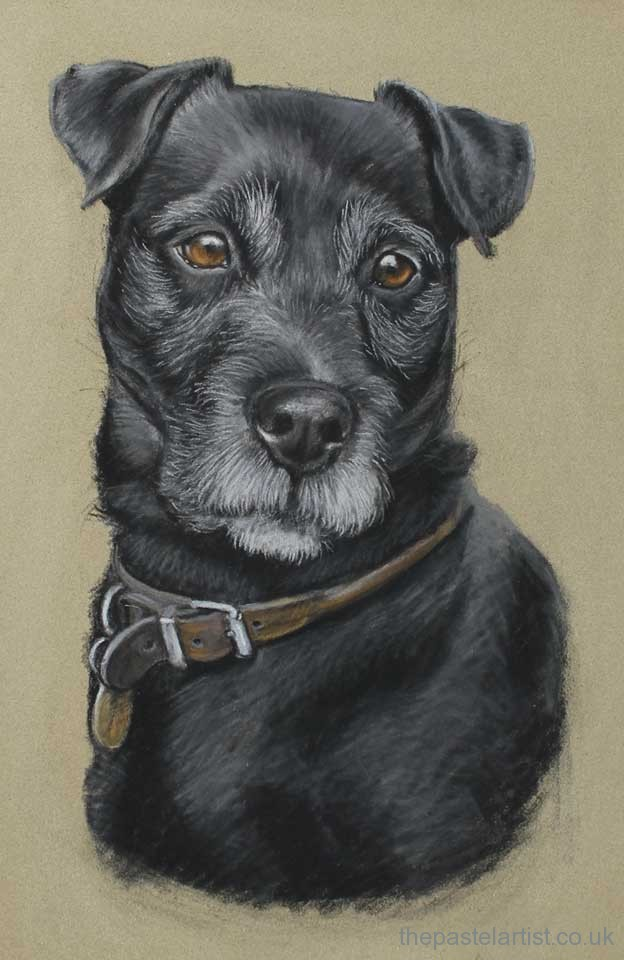 Terrier hand drawn in pastel by Nina Squire