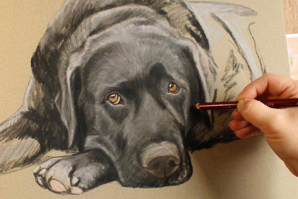 portrait of a labrador in soft pastels by Nina Squire
